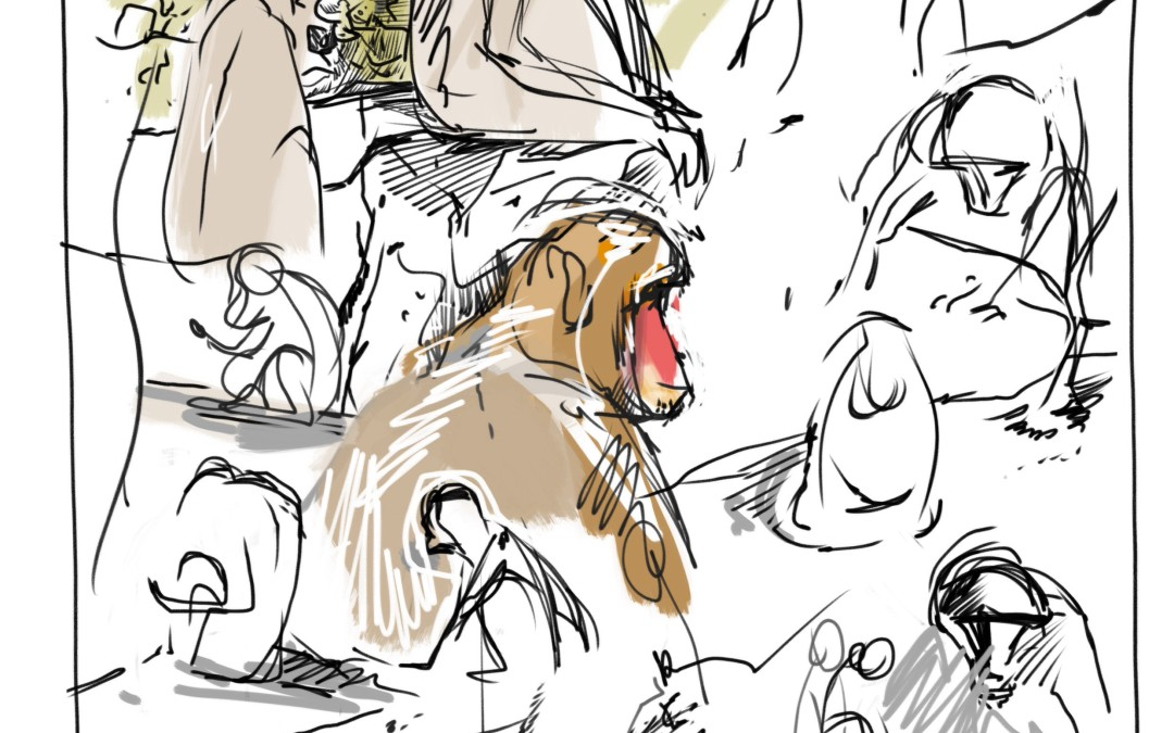 Sketching Monkeys in City Park  Launceston Tasmania